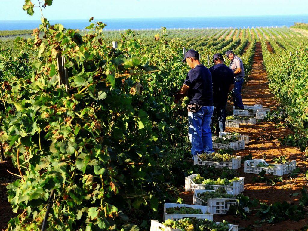 Investing in Sicily